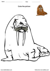 coloring a walrus activity for kids. Coloring activity for kids