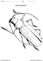coloring beetles activity for children - PDF printable worksheet