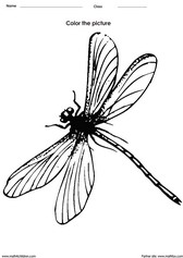 coloring a dragonfly activity for children - PDF printable worksheet