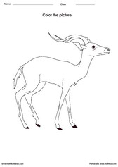 coloring an antelope activity for children - PDF printable worksheet