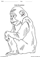 coloring a chimpanzee activity for children - PDF printable worksheet
